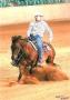 Showhorses / ältere Pferde